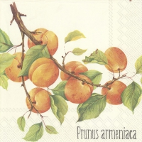 Lunch Servietten PRUNUS ARMENIACA cream