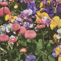 Servietten 33x33 cm - FLOWERS IN THE SPRING