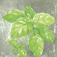 Servietten 33x33 cm - HERBAL FLAVOUR BASIL
