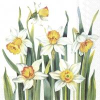 Servietten 33x33 cm - WHITE NARCISSUS white