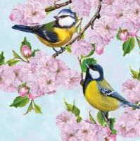 Servietten 33x33 cm - Tits on Cherry Blossom Twig