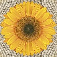 Servietten 33x33 cm - Sunflower on Seeds