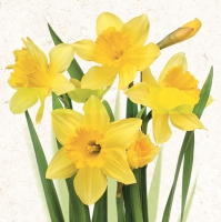 Servietten 33x33 cm - Bunch of Yellow Daffodils