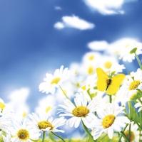 Servietten 33x33 cm - Blue Sky Daisies Meadow