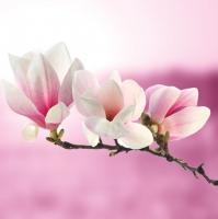 Servietten 33x33 cm - Magnolia Zweig Rosa