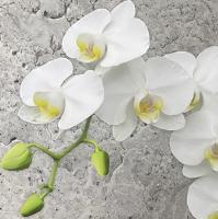 Servietten 33x33 cm - Orchidee