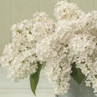 Servietten 33x33 cm - White Lilac Bouquet
