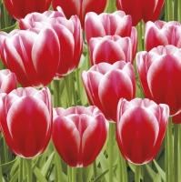 Servietten 33x33 cm - Red Tulips Power