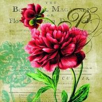 Servietten 33x33 cm - Rote Rose