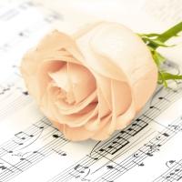 Servietten 25x25 cm - Classic Rose