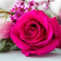 Servietten 33x33 cm - Rose Blossom