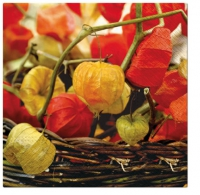 Servietten 33x33 cm - Physalis of Autumn