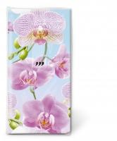 Taschentücher - Bright orchid