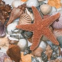 Servietten 25x25 cm - Vom Meeresboden aus