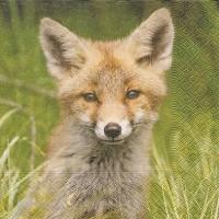 Lunch Servietten Foxy fox