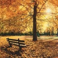 Servietten 33x33 cm - Golden autumn