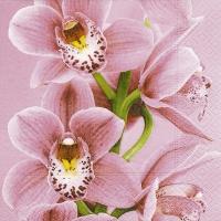 Servietten 33x33 cm - Rosa Orchidee