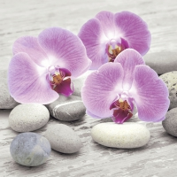 Servietten 24x24 cm - Orchids on stones
