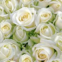Servietten 25x25 cm - White roses