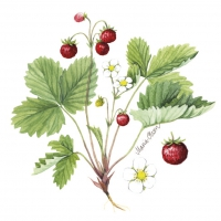 Servietten 33x33 cm - Wild strawberry