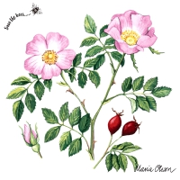 Servietten 33x33 cm - Dog rose