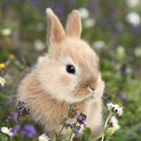 Servietten 33x33 cm - Bunny in field