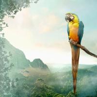 Servietten 33x33 cm - Parrot