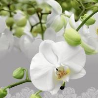 Servietten 33x33 cm - Orchid festival