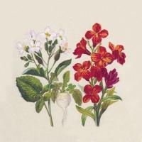 Servietten 24x24 cm - Botanical