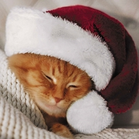 Servietten 33x33 cm - Cute Cat