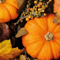 Servietten 33x33 cm - Fall Pumpkins