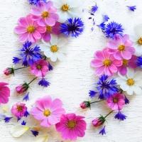 Servietten 24x24 cm - Summer florals