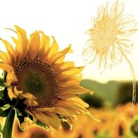 Servietten 24x24 cm - Dusk Sunflower