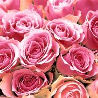 Servietten 33x33 cm - Pink Roses