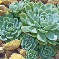 Servietten 33x33 cm - Desert plants