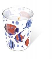 Glaskerze - Glaskerze Tropical fish