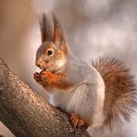 Lunch Servietten Cute Squirrel