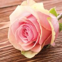 Servietten 33x33 cm - Rose Passioncm
