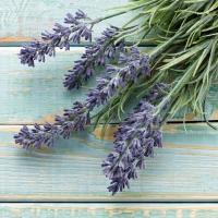Lunch Servietten French Lavender