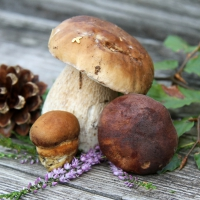 Lunch Servietten Boletus Mix