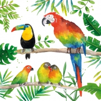 Servietten 33x33 cm - Tropical Birds
