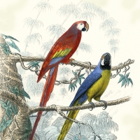 Servietten 33x33 cm - Antique Parrots