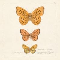Servietten 33x33 cm - Papillons Antiquitäten