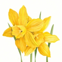 Servietten 33x33 cm - Daffodils