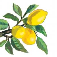 Servietten 33x33 cm - Lemon Musée white 33x33 cm