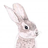 Servietten 33x33 cm - Rabbit
