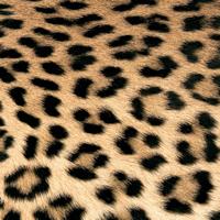 Servietten 33x33 cm - Leopard Couture