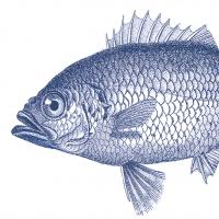 Servietten 33x33 cm - Fisch-Marinecm