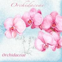 20 Servietten 33x33 cm - Orchidaceae