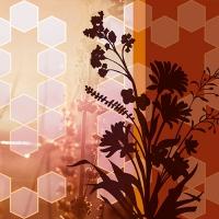 20 Servietten 33x33 cm - Nature desire
